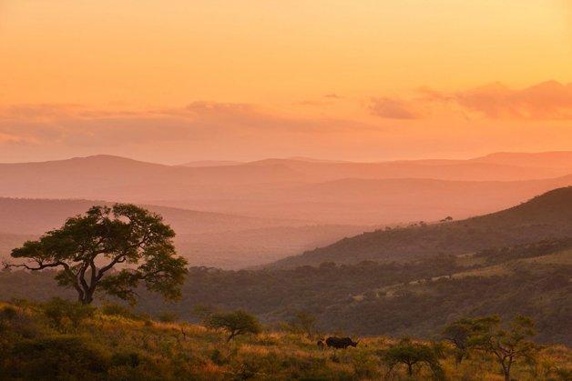 rinoceronte-africa2