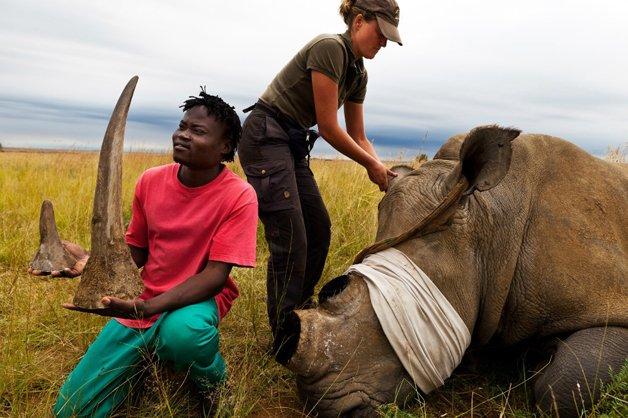 rinoceronte-africa3