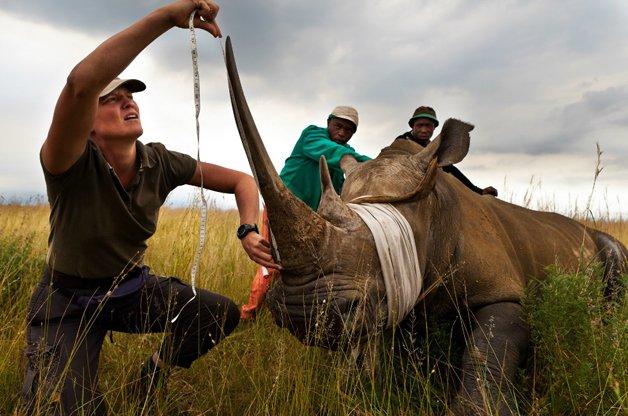 rinoceronte-africa4