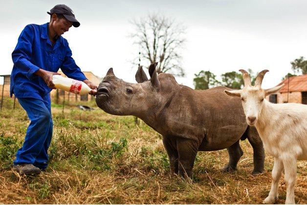 rinoceronte-africa5