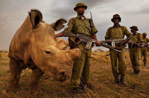 rinoceronte-africa6