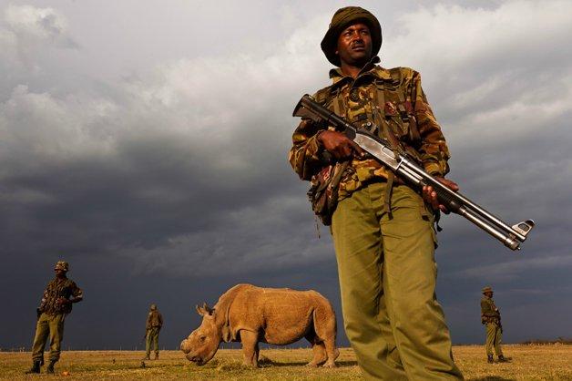 rinoceronte-africa7