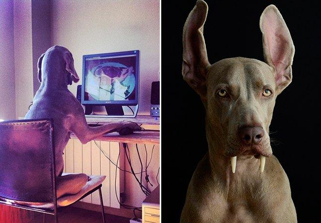 Espanhol descobre paixão pela fotografia através das poses divertidas de sua cadela