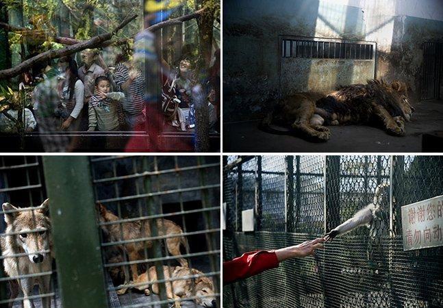 Série fotográfica mostra a triste realidade dos zoológicos chineses