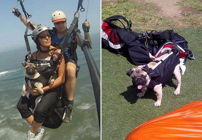 Casal leva cão para fazer paragliding – e ele parece ter adorado