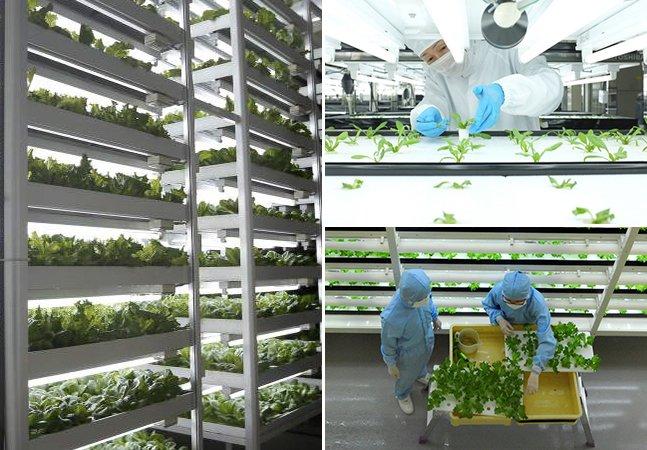"""Toshiba cria """"horta industrial"""" para produzir vegetais sem agrotóxicos em antiga fábrica de disquetes"""
