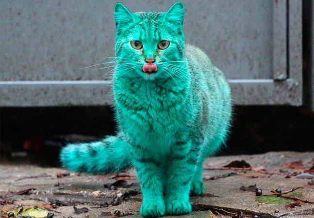 O mistério do gato verde que tem sido visto pelas ruas da Bulgária