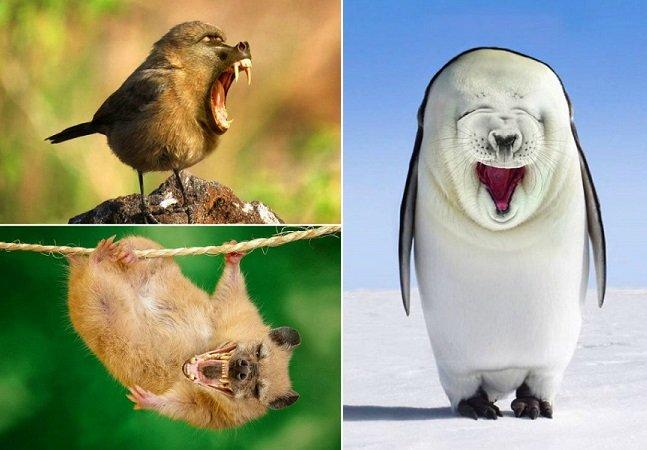Artista especializada em Photoshop cria fotos divertidas com animais híbridos