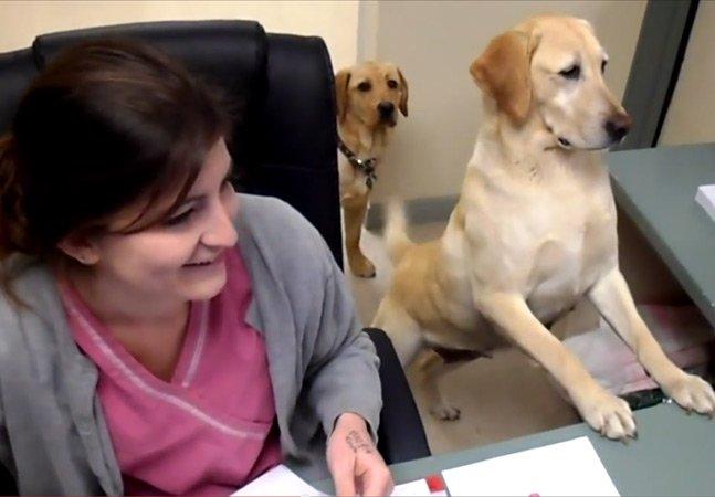 """Clínica veterinária inova ao """"contratar"""" assistente para entregar receitas"""