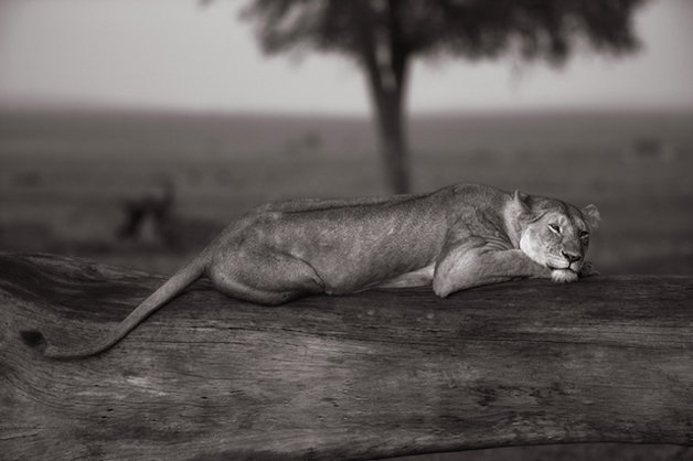 masai-mara20