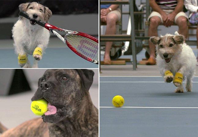 O que acontece quando cãezinhos se tornam gandulas em um jogo de tênis
