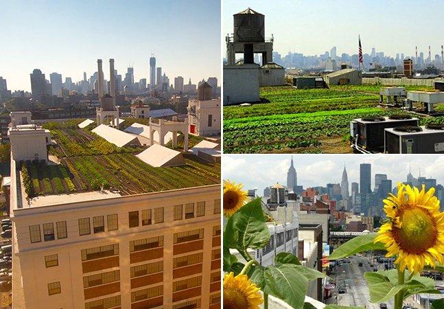 A horta urbana mais alta do mundo que fica no topo de um prédio em Nova York