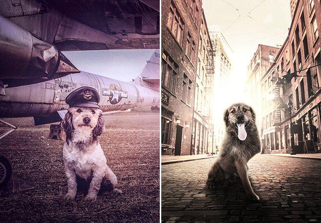 Fotógrafo cria cenários mágicos para ajudar cães de abrigo a serem adotados