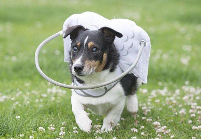 O bambolê que ajuda cães cegos a se locomoverem com segurança