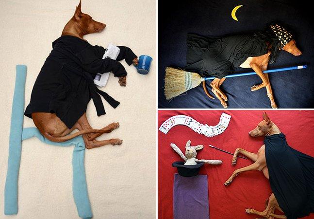 Dona coloca seu cão em altas aventuras enquanto ele dorme