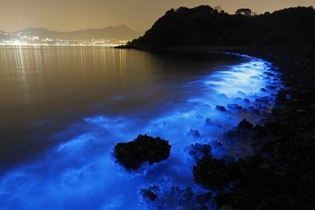 bioluminescencia1