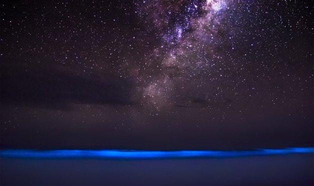 bioluminescencia4