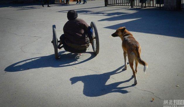 cadeira-rodas-cachorro7