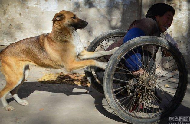 cadeira-rodas-cachorro8