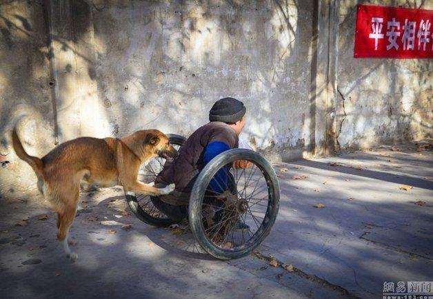 cadeira-rodas-cachorro9