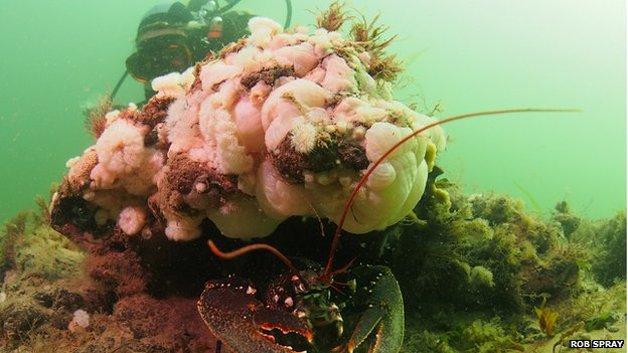 floresta-submersa2