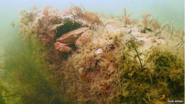 floresta-submersa3