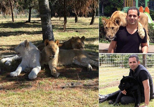 A história do homem que resgata felinos maltratados em zoos, circos e outras atrações