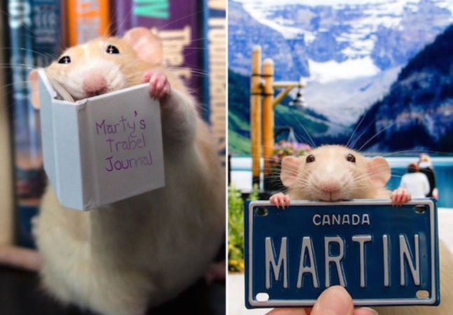 Dono cria conta no Instagram retratando seu hamster em situações inusitadas