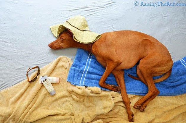 rufus-sleeping-dog-adventures-1