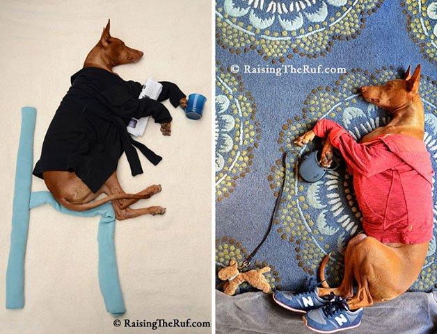 rufus-sleeping-dog-adventures-2