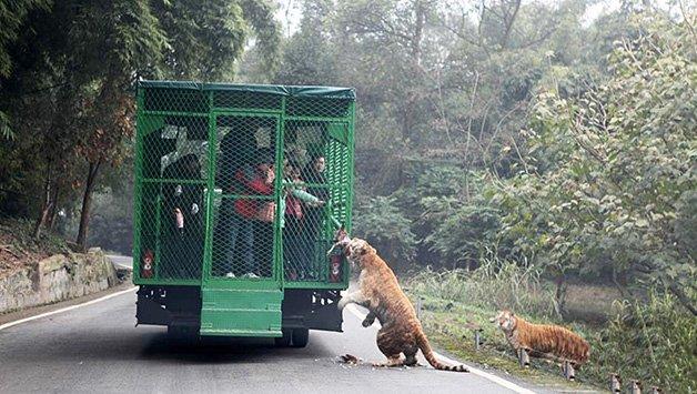 Best Zoo Visit Bar None