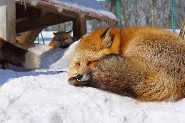 FoxVillage5