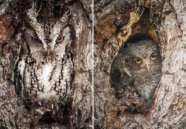 Fotógrafo cria série registrando corujas camufladas em árvores