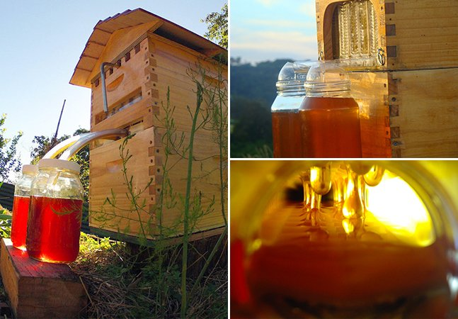 Método inovador permite retirar mel de colmeia sem incomodar as abelhas