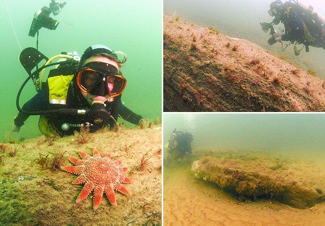 Conheça a floresta de 10 mil anos que foi descoberta submersa na costa inglesa