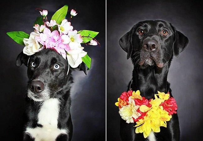 O projeto fotográfico que está ajudando cães abandonados a encontrar um lar