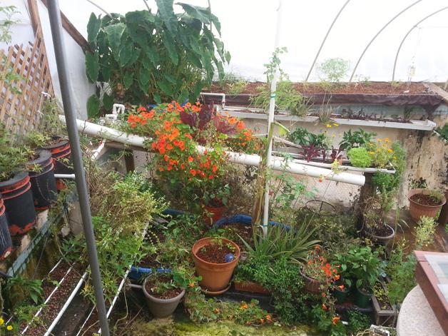 garden-pool5