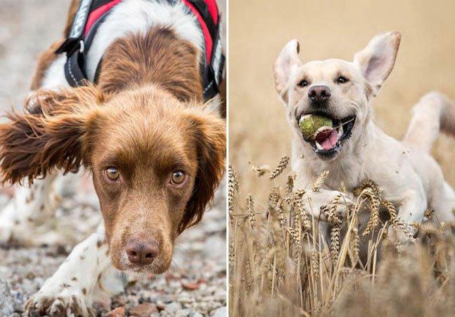 Concurso elege as melhores fotos de cachorros de 2014
