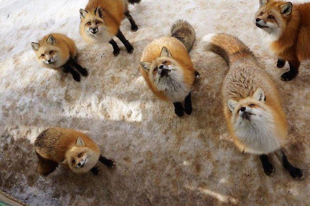 raposa grupo 12