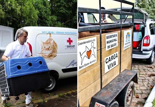 Cidades brasileiras criam SAMU para socorrer animais de rua