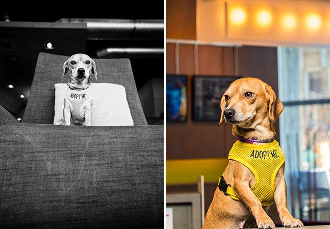 Hotel acolhe cachorros de rua para que hóspedes possam adotá-los