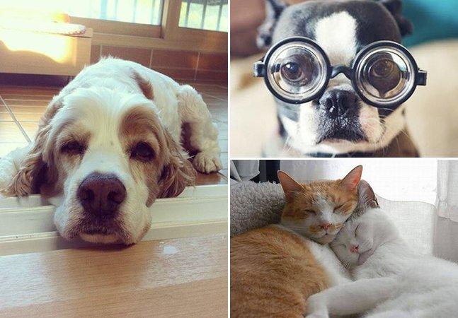 Ama animais? Conheça a plataforma de financiamento coletivo onde você pode ajudar animais necessitados