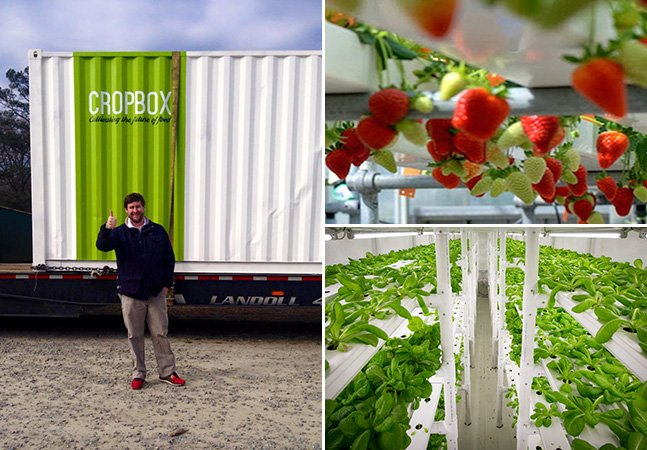"""Jovens criam """"container-fazenda"""" capaz de produzir alimentos gastando muito pouca água"""