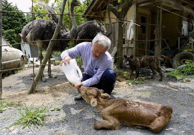 O homem que desafia a radiação de Fukushima para cuidar dos animais abandonados por lá