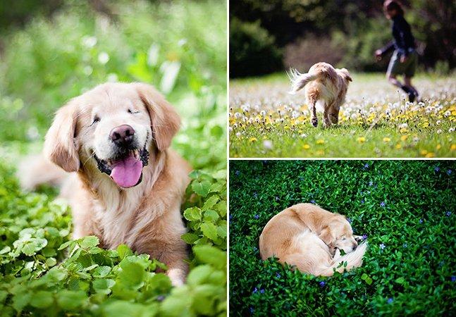 Cachorro que nasceu sem olhos vira cão de terapia e leva conforto para doentes