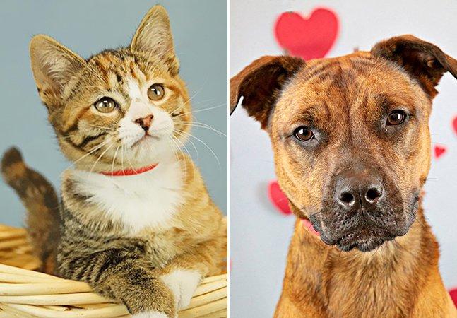 Abrigo leva animais a escritórios para diminuir o estresse dos funcionários e ajudar pets a encontrar uma casa