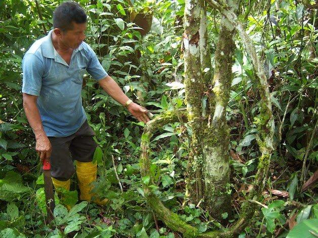 ayahuasca22