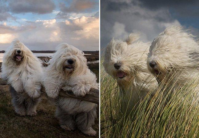 Jovem clica fotos divertidas de sua inseparável dupla de cadelinhas irmãs