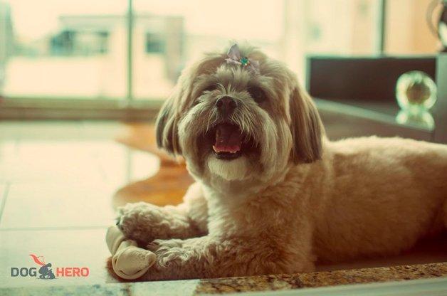 doghero2