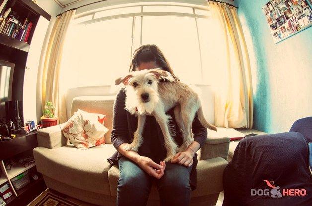 doghero6